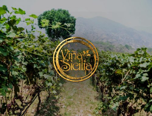 Discover the Award Winning Wines of this Vineyard in Colombia