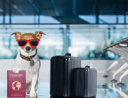 Traveling with Pets from Colombia: Dogs and Cats