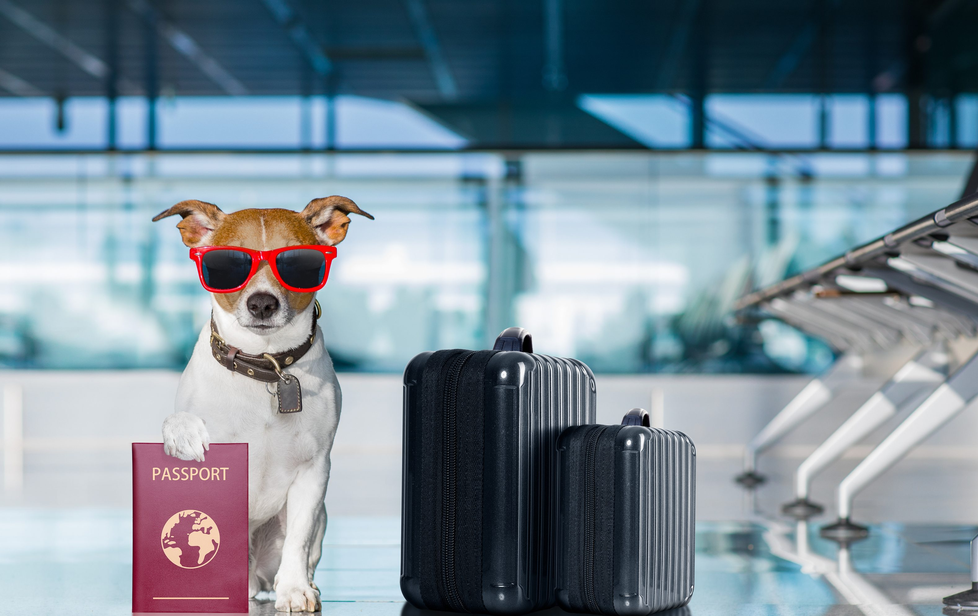 traveling with pets from colombia